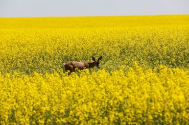 Canadian farmers reap record profits as crop prices soar