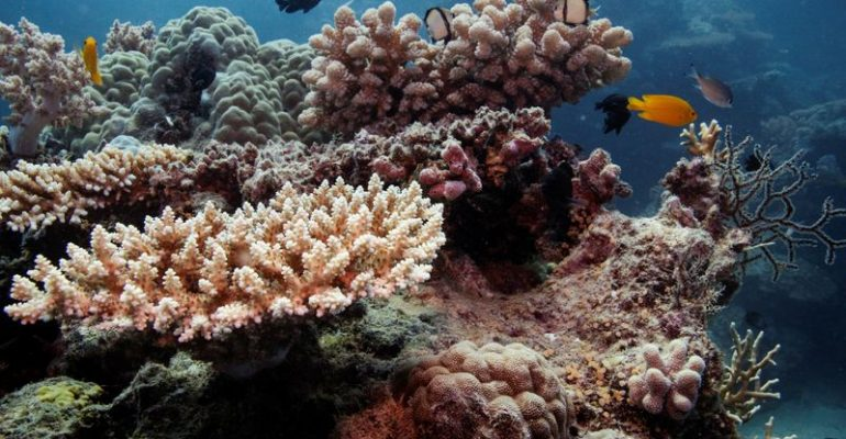 """Great Barrier Reef should be listed as """"in danger"""", UN committee recommends"""